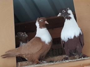 Мраморный голубь Новокосино заказать памятник на могилу в полоцке