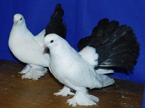 Мраморный голубь Славянский бульвар Шар. Габбро-диабаз Белый